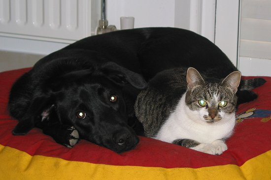 A dog & a cat sitting together.