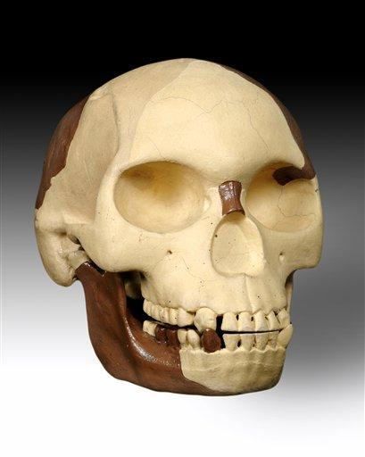 The hoax skull of Piltdown Man